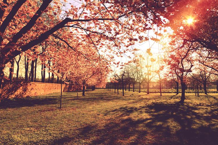 Kirschengarten